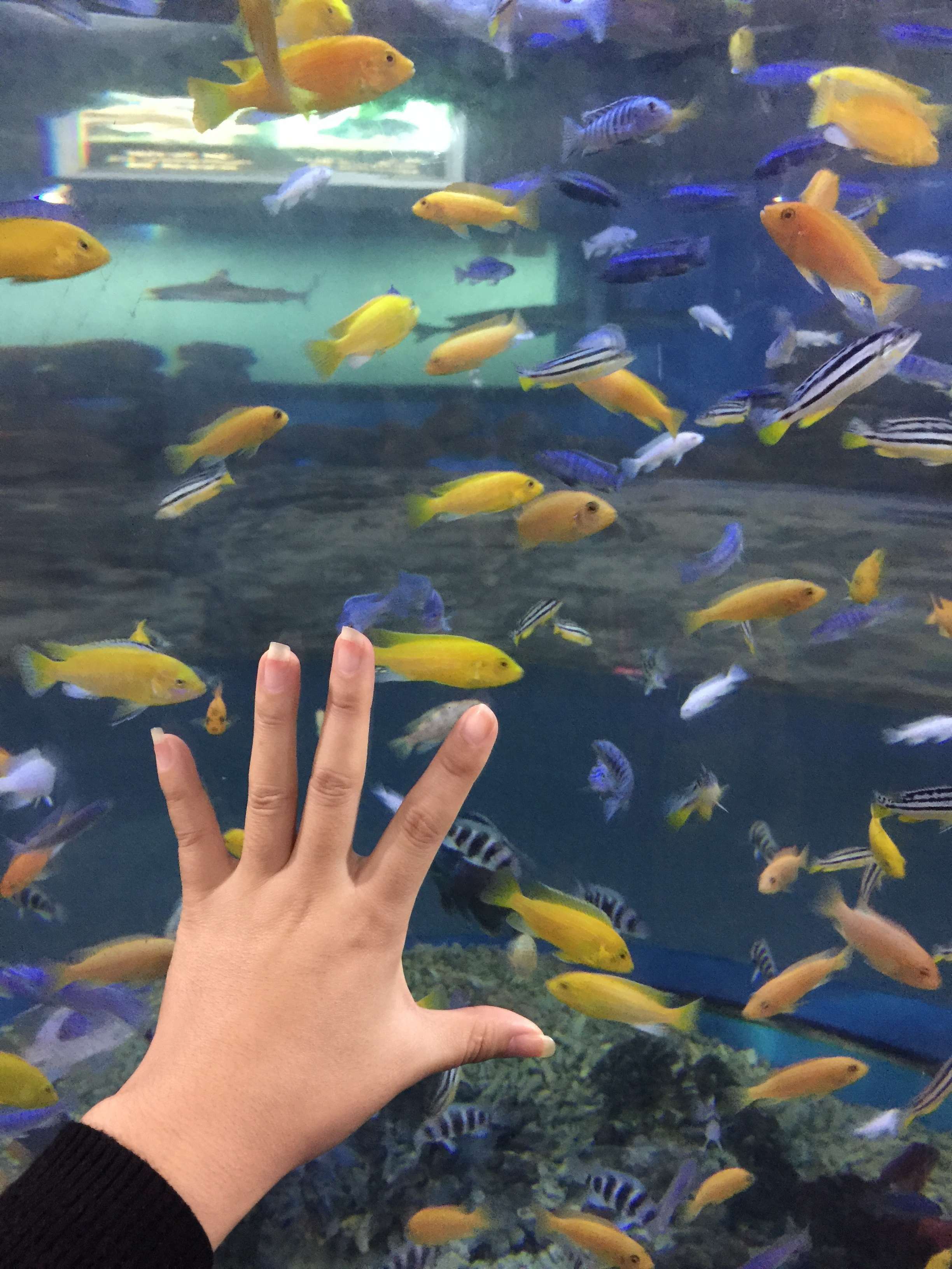 壁纸 动物 海底 海底世界 海洋馆 水族馆 鱼 鱼类 2448_3264 竖版 竖